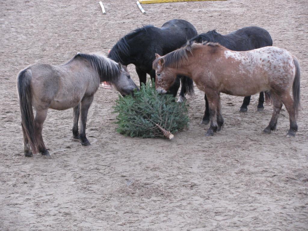 Paard eet kerstboom