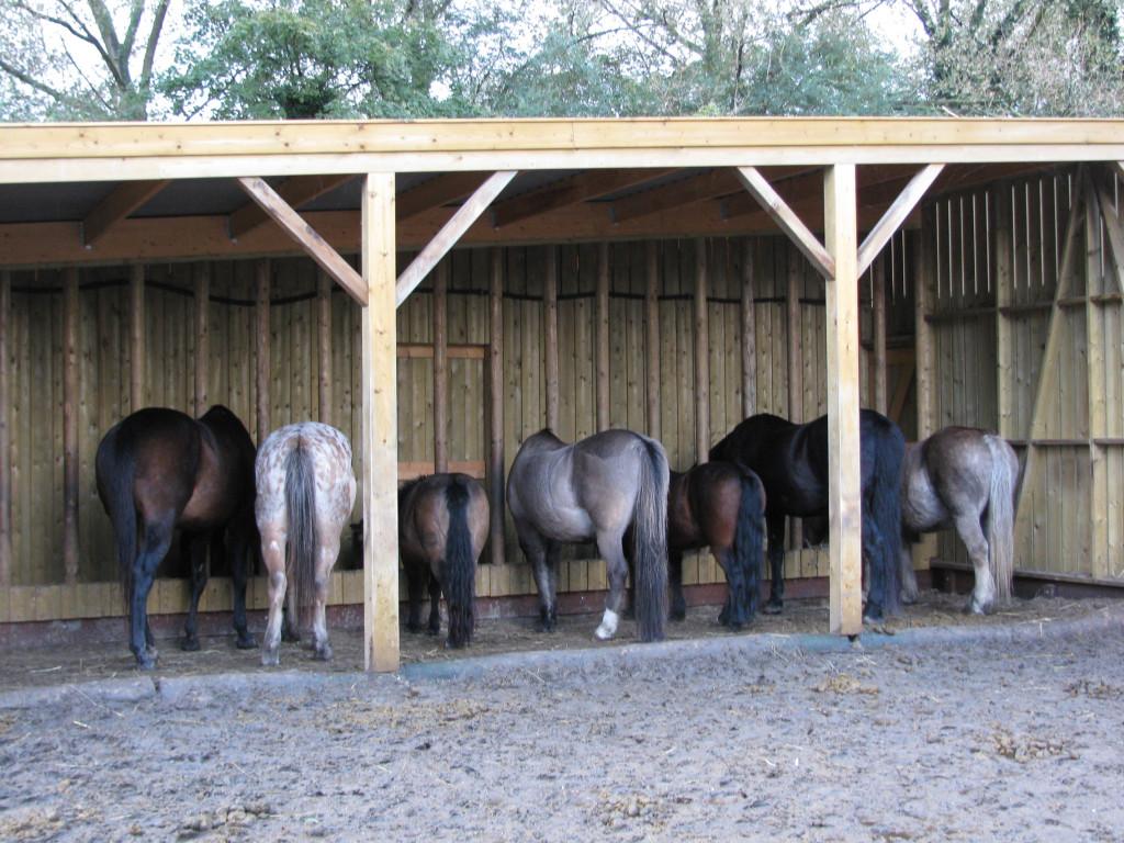 Paardenbillen
