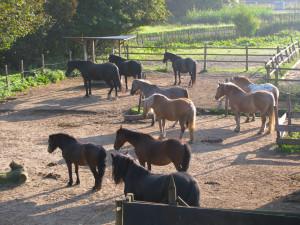 Alle paarden paddock