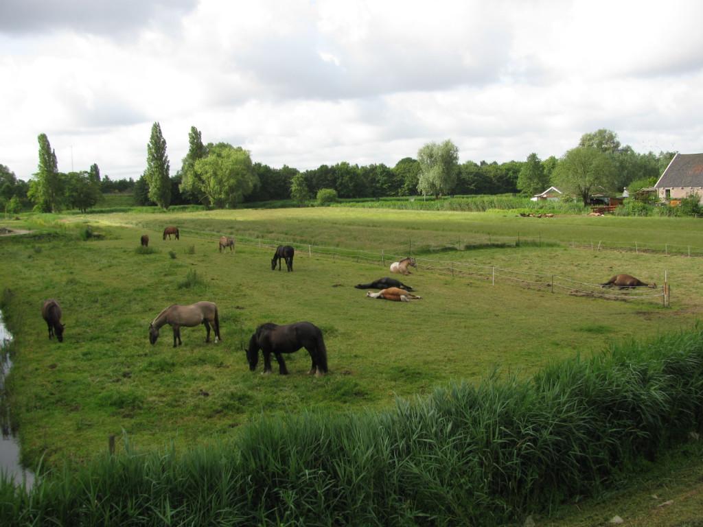Weide Buurtboerderij